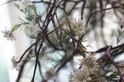 Blumengalerie Murau