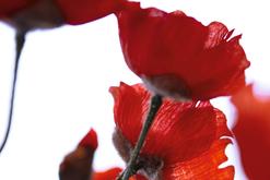 Kubart - Die Blumenwerkstatt