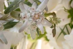 Die Blumengalerie