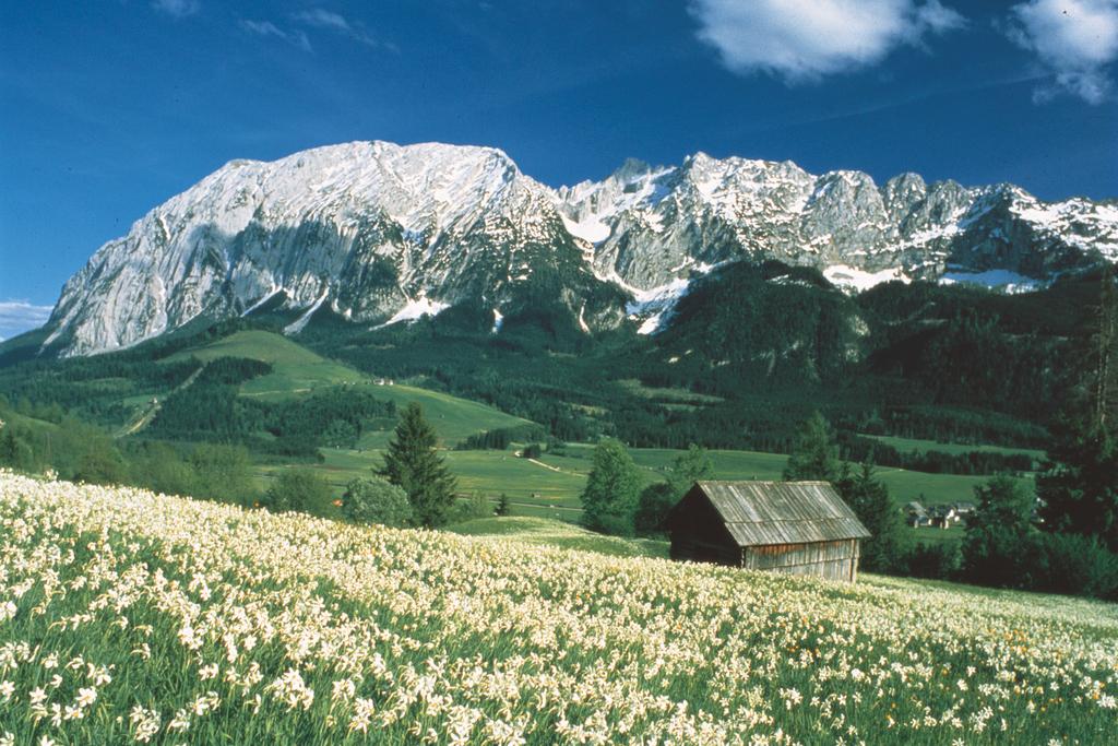 Steiermark Narzissenfeld